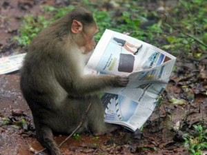 monkeyreading